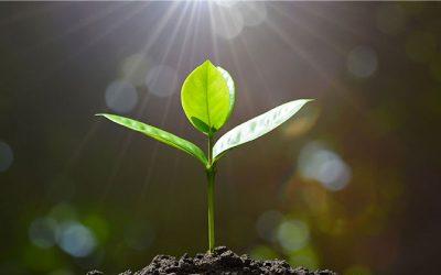 Redução de custos é a estratégia para crescimento em tempos de incertezas, aponta pesquisa